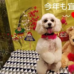 犬のいる暮らし/新年挨拶/お正月2020/暮らし/フォロー大歓迎/生花/... 🎍謹賀新年✨ ご挨拶〰❤ 『皆さん本年も…(5枚目)