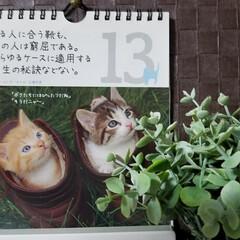 カレンダー/ガーデン/花/庭/最近買った100均グッズ/ダイソー/... 🐈にゃんの📆カレンダー🎵  心理学者の名…