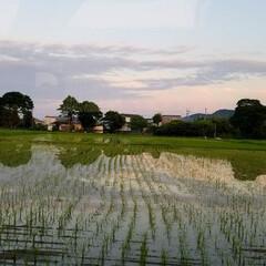 草花/空/いまそら/夕焼け空/夕焼け/夕陽/... 素敵な夕焼けの景色✨  一枚目は、先日の…(2枚目)