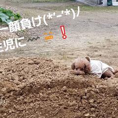 犬のいる暮らし/わんこ/リミアの冬暮らし/リミアな暮らし/暮らし/フォロー大歓迎 お待たせ〰️|^▽^)ノ  🐶この子でー…