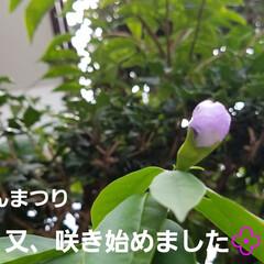 和の花/涼しげ/山野草/ガーデン/ガーデニング/庭の花/... photoとは関係ない私事ですが( *´…(5枚目)