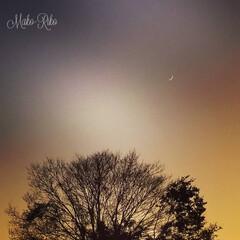 夕暮れの景色/クリスマス2019/リミアの冬暮らし/暮らし/木/記念/... 500枚投稿記念〰❤ そして偶然にもフォ…(1枚目)