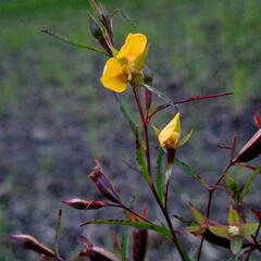 あぜ道/雑草/はな/おでかけ 田んぼのあぜ道に咲いていた花