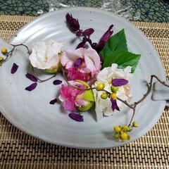 花を飾る/🌺を盛り付ける/皿/食器/我が家の食器/住まい/... 大好きなお皿に感謝を込めて お庭の酔芙蓉…
