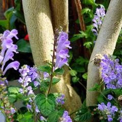 家庭菜園/フォトフレーム作り/ガーデン/花のある暮らし/お庭/雑貨/... フォトフレームを少しお花で飾って見ました…(4枚目)