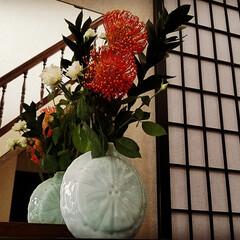 花のある暮らし/華/花/朱色/住まい/暮らし 久し振りに玄関のお出迎えの華を生けました…