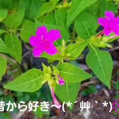 お日様/花のある暮らし/出会い/多肉植物/木漏れ日/花に囲まれたい/... 今日は、病院に来ています🤭  待ち時間に…(3枚目)