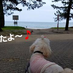 おでかけ/癒し/花/犬と花/犬のいる暮らし/散歩/... 🐩🚶♀️久々に海に行きました🚐💨🎵  …(1枚目)