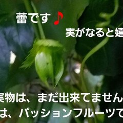 湿気対策/梅雨/梅雨対策/梅雨対策アイテム/教えて!みんなの梅雨対策 💠が咲かなくなって…🍀🍀🍀葉ぁ~    …(5枚目)