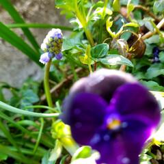 花の生活/庭の花/春の一枚/フォロー大歓迎/風景/花景色/... 庭の花達 Ⅰ  春の花達が、楽しそうに咲…(8枚目)