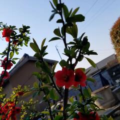 花の生活/庭の花/春の一枚/フォロー大歓迎/風景/花景色/... 庭の花達 Ⅰ  春の花達が、楽しそうに咲…(2枚目)