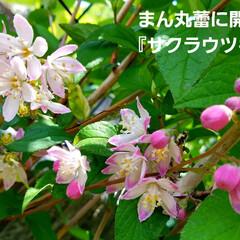 鮮やかカラー/庭/花のある暮らし/はな/ガーデン/暮らし/... 庭が、鮮やかになりました💠🌼🥀🌿(10枚目)