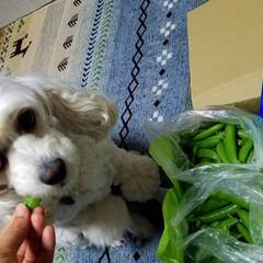 野菜届く/今日の夕焼け/夕陽/宅急便/犬と野菜/野菜/... 新鮮野菜が届いた~🍆🥒(*´艸`*)💕 …(2枚目)