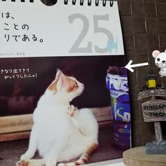 犬のいる暮らし/名言集/カレンダー 🐈にゃんの📆カレンダー🎵  驚きは、知る…
