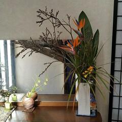 グリーン/花/玄関/暮らし/花のある暮らし/玄関の花 桜も終わり…、今週のお出迎えの お花です。