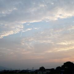 散歩道/生き物/タニシ/夕焼け/鳥/空/... 🐩🚶♀️お散歩で、また初めて見る生き物…(4枚目)