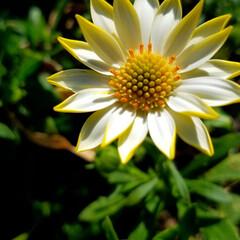 花の生活/庭の花/春の一枚/フォロー大歓迎/風景/花景色/... 庭の花達 Ⅰ  春の花達が、楽しそうに咲…(6枚目)