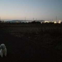 散歩道/夕暮れ/夕暮れ時の空/夕焼け/月/空/... 連チャンUPで失礼~ぃσ(*^^*)  …(2枚目)