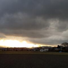 わんこのいる暮らし/雪雲/夕陽/風景/散歩道/菜の花/... 🐩🚶♀️お散歩の途中、急に雲行きが悪く…(7枚目)