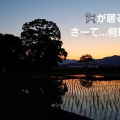 草花/空/いまそら/夕焼け空/夕焼け/夕陽/... 素敵な夕焼けの景色✨  一枚目は、先日の…(3枚目)