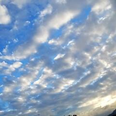 みるくと夕陽/散歩/空と犬/sky/青空/SORAMADO/... 青空  良いよね~   (´ー`).。*…(1枚目)