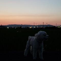 夕陽/夕空/夕焼け/ガーデン/紫陽花/庭/... お散歩🐩🚶♀️ 今日も素敵な夕焼けでし…
