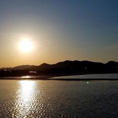 コロナをぶっ飛ばせ/夕陽/夕焼け/風景/草花/散歩道/... 🐩🚶♀️久しぶりにお散歩風景や出逢った…