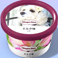 犬好き/わんこのいる暮らし/新製品/みるく/犬のいる暮らし/オリジナルアイス/... 新製品☝ 『Häagen-Dazからミル…
