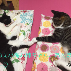 ハム/小梅/ペット 14歳のおばあちゃん猫、小梅に、ちょっか…