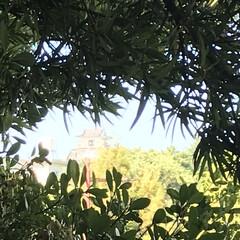 パワースポット 出世のパワースポットから望む浜松城の天守…