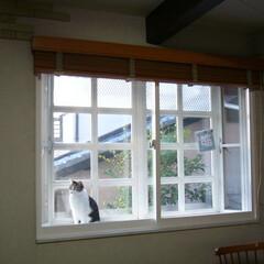 内窓/ねこ/内窓DIY/出窓/西宮市 西宮市の山の手に暮らすミー子ちゃんです。…