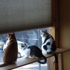 ねこ/内窓/大阪府/内窓DIY 海を臨む高台のO様邸の6匹です。なにか某…