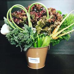 農家の嫁/ベジタリアン/オーガニック/無農薬野菜/ベジブーケ オーダー頂いたベジブーケ💐 あまり野菜の…