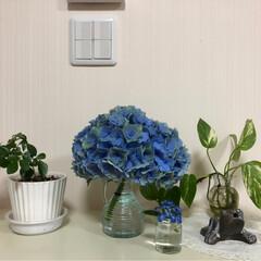 瓶が好き/花のある暮らし/紫陽花 紫陽花も終わりを迎え剪定しました。 捨て…
