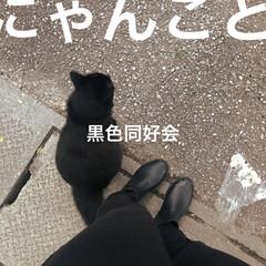 貝殻/GU/黒猫/沖縄/お散歩/フォロー大歓迎/... 路上での運命的な出会い  全身黒の私と全…