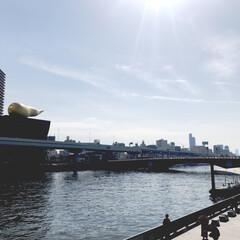 浅草/吾妻橋/スーパードライホール/金の/散歩/ひとりお散歩部 快晴 金の う…ではなくて、泡と吾妻橋 …