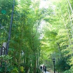 竹林の小径/修善寺/旅の風景/竹林/旅 修善寺の竹林の小径はまっすぐに伸びる竹林…
