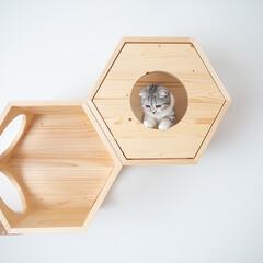 猫/猫とインテリア/猫のいる暮らし/猫との生活/スコティッシュ 六角ハウスの1つには、おこもり感を作るべ…
