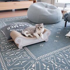 うちの子自慢/猫/子猫/スコティッシュ/猫との暮らし 爪とぎスツール、カリカリーナの上でくつろ…