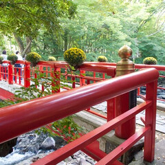 修善寺/旅の景色/風景/旅 修善寺へプチ旅行。 竹林の小径へ向かう途…
