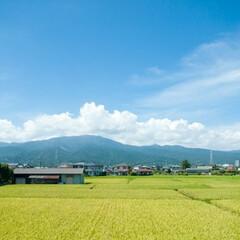 風景/旅/景色/旅の記録/箱根 夏の終わり頃、ロマンスカーの車内から撮っ…
