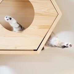 猫/猫のいる幸せ/猫との暮らし/猫のいる生活/スコティッシュ 六角ハウスをふと見上げたら、猫の足だけが…