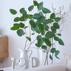 わたしのお気に入り/インテリアグリーン/ユーカリ/枝物 一番好きな枝物はドウダンツツジですが、二…