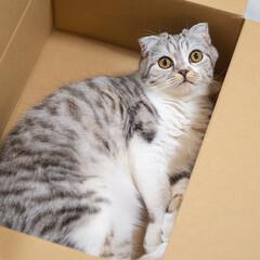 猫/猫との暮らし/スコティッシュ/猫のいる生活 通販で買い物するともれなく猫グッズが付い…