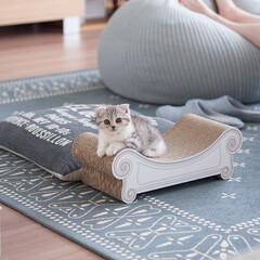 うちの子ベストショット/爪とぎ/スコティッシュ/スコティッシュフォールド/猫/子猫 お気に入りの爪とぎベッド「カリカリーナ」…