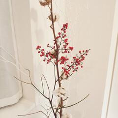玄関インテリア/枝物/観葉植物/南天/コットン/冬 いつぞやの冬の玄関。白ぬりの枝とコットン…