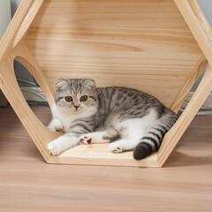 猫派/スコティッシュ/猫との暮らし/猫との生活 いずれ壁に取り付けるつもりで買ったキャッ…