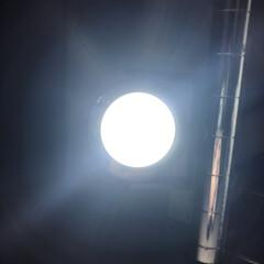 100均/照明器具/オシャレ/ルームライト/セリア 続いてのアイテムはこちら! これなーんだ…(1枚目)