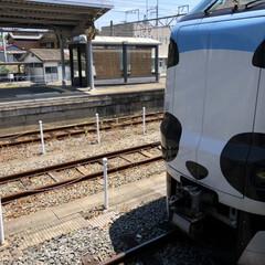 くろしお/パンダ/電車/和歌山/フォロー大歓迎/LIMIAファンクラブ/... 和歌山→大阪に移動する際に乗った「特急く…