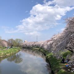 お花見/桜/LIMIAおでかけ部/フォロー大歓迎/おでかけ/風景/... 今年も無事にお花見が出来ました〜 昨日は…